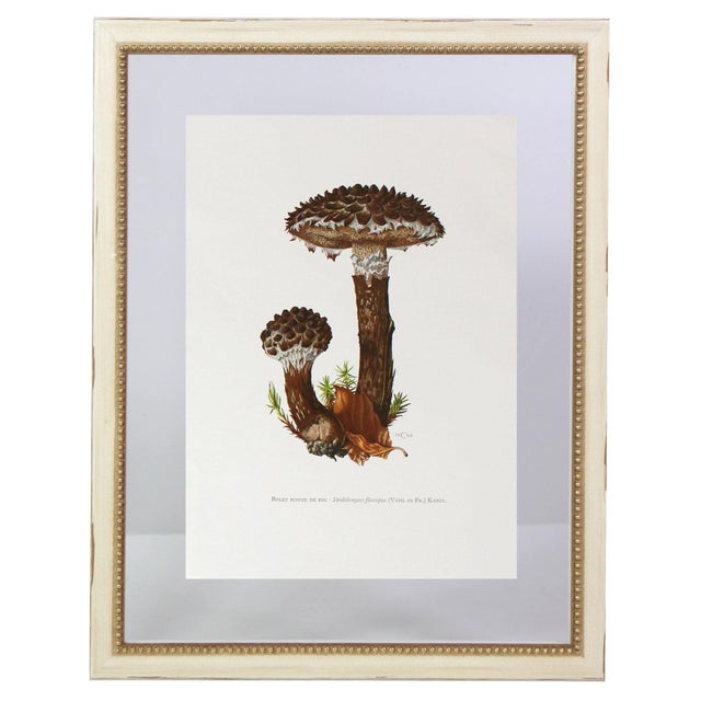 """Antique French Botanic Mycology Study Lithograph - Strobilomyces Strobilaceus """"Old Man of the Woods"""" Mushroom For Sale - Image 4 of 4"""