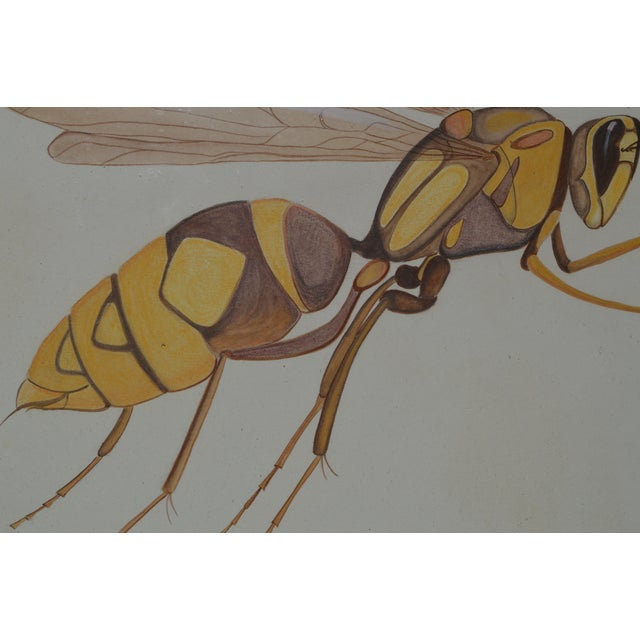 Insect Ant Pencil Paper Framed Art Still Life Painting Drawing Signed Payne For Sale - Image 9 of 12