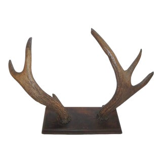 Mounted 19th Century Antlers Hat Hack For Sale