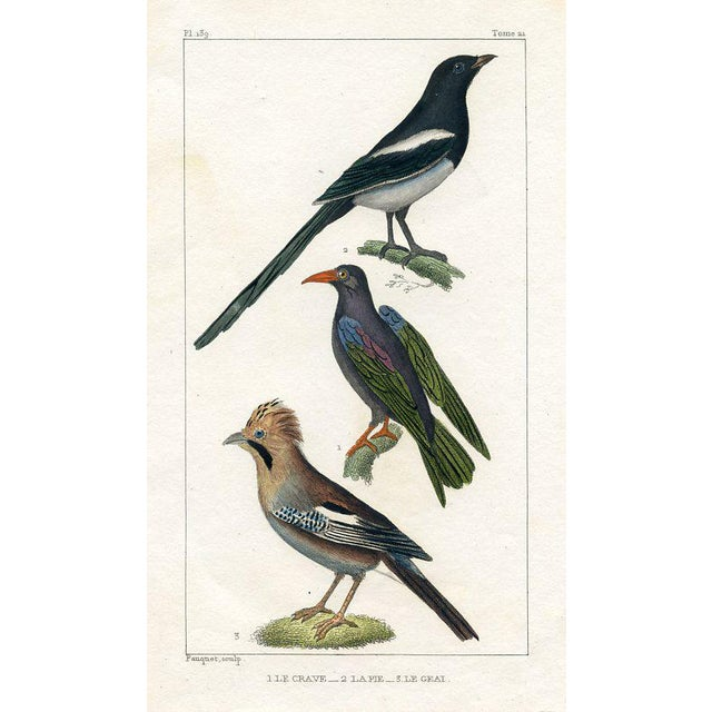 Illustration Magpie and Jay, 1831 French Bird Engraving For Sale - Image 3 of 3