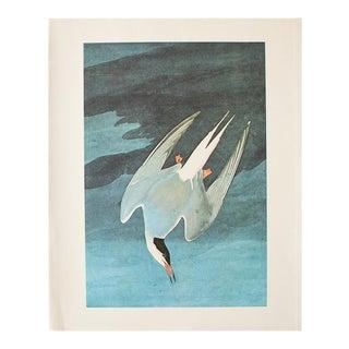 1966 Vintage Cottage Print of Arctic Tern by Audubon For Sale