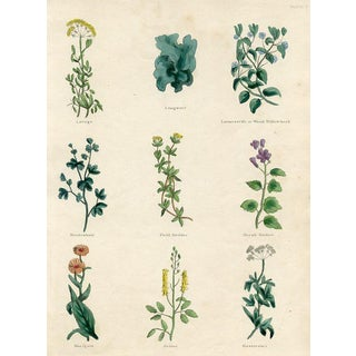 1840s English Herbal Engraving, Including the Marigold For Sale
