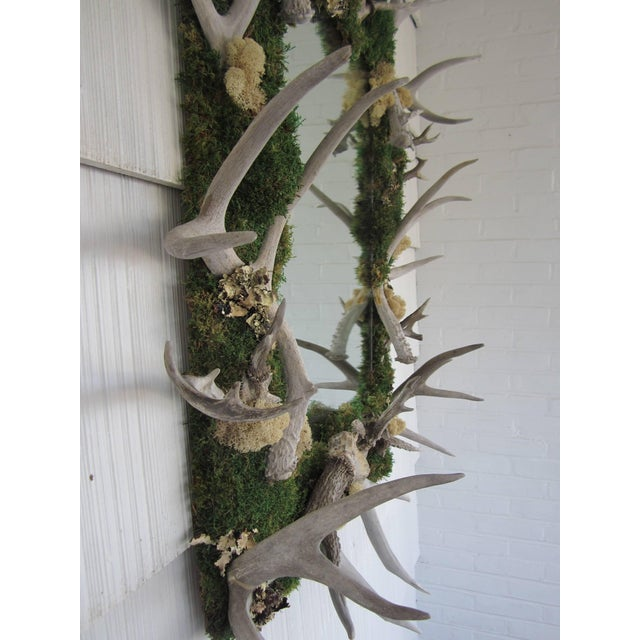 Country Antler and Preserved Moss Mirror For Sale - Image 3 of 7