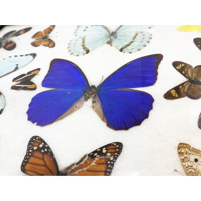Mid-Century Modern Vintage Mid-Century Large Butterfly Tray, Handmade For Sale - Image 3 of 4