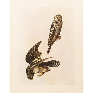 1960s Cottage Lithograph of Hawk Owl by Audubon For Sale