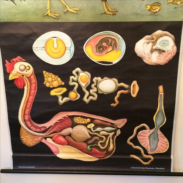 Jung-Koch-Quentell Chart Chicken - Image 4 of 11