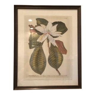 """Magnolia Flower"" Botanical Print For Sale"