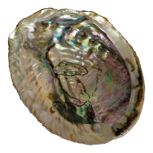 Natural Vintage Abalone Shell For Sale