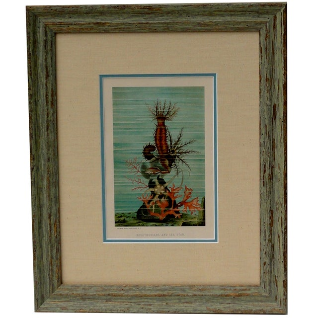 Original chromolithograph by Prang from J.G. Wood's Animate Creation, circa 1885. Displayed in a wood frame, double fabric...