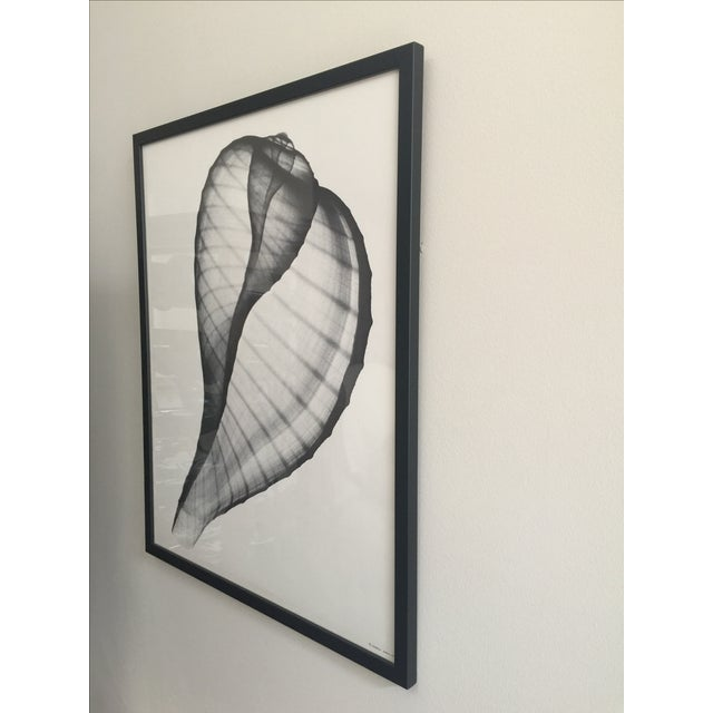 Framed George Green X Ray Fig Shell Ficus Print - Image 4 of 4