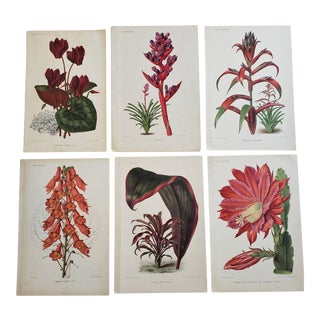 Antique French Colored Chromolithographs From Revue Horticole, Set of 6 For Sale