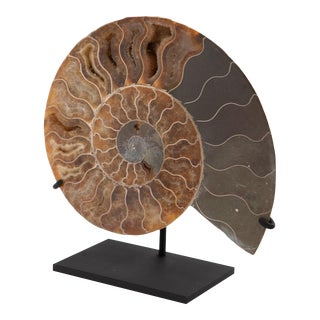 Decorative Mounted Ammonite Slice II For Sale