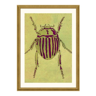 Striped Beetle - Light Series no. 3 by Jessica Molnar in Gold Frame, Small Art Print For Sale