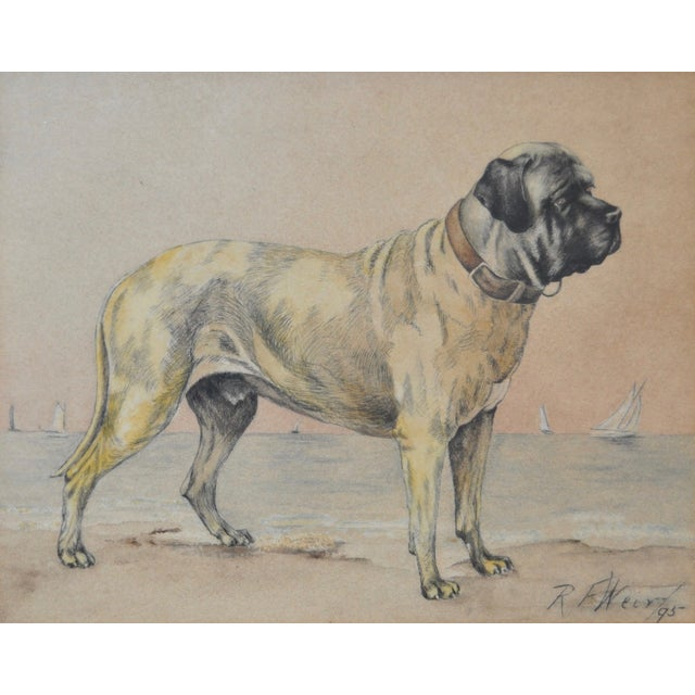 English Traditional 1895 Bullmastiff Watercolor by R.F. Weir For Sale - Image 3 of 5