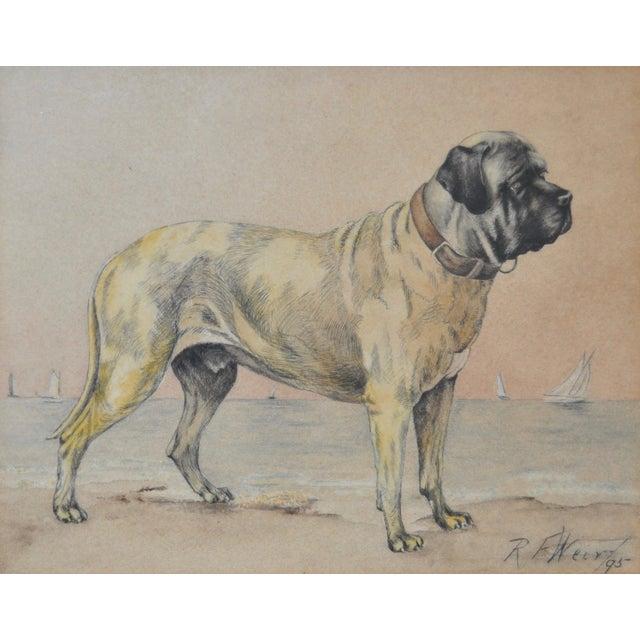 1895 Bullmastiff Watercolor by R.F. Weir - Image 3 of 5