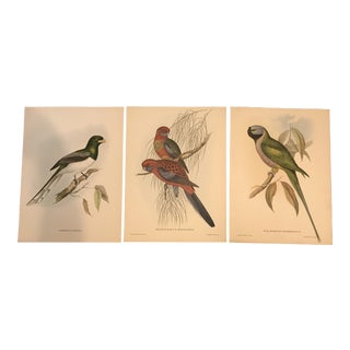 Set of 3 John Gould Tropical Birds Prints