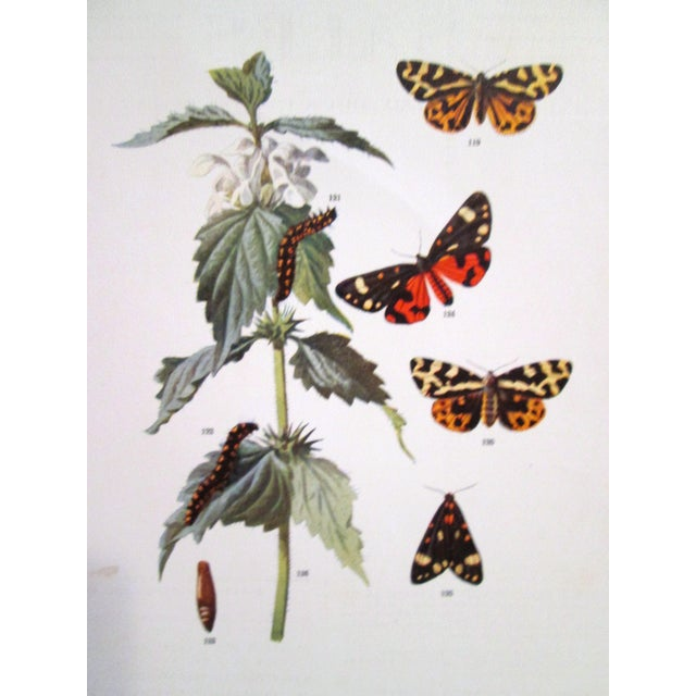 1903 Butterfly & Botanical Prints - Pair - Image 4 of 8