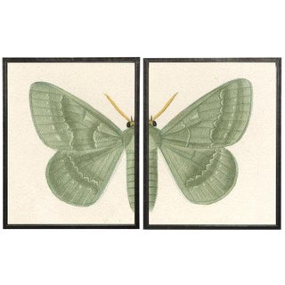 "Split Green Butterfly - 38"" X 25"" For Sale"
