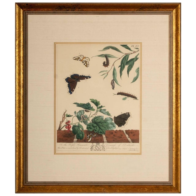 Plate Xii, Camberwell Beauty, Large Magpie Moth, Moses Harris, 1785 For Sale