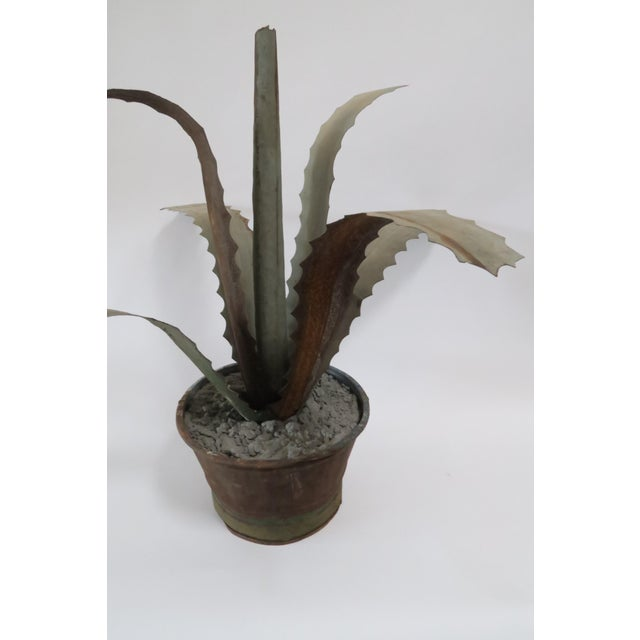 Zinc Potted Succulents - A Pair - Image 4 of 6