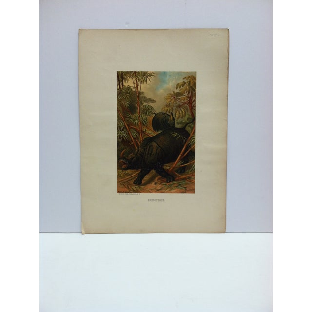 """Mid 20th Century Vintage Mounted Color Animal Print, """"Rhinoceros"""" by Selmar Hess Publisher For Sale - Image 5 of 5"""