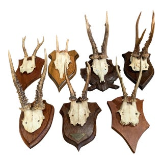 Early 20th Century French Mounted Deer Antlers Trophies, Set of Seven For Sale
