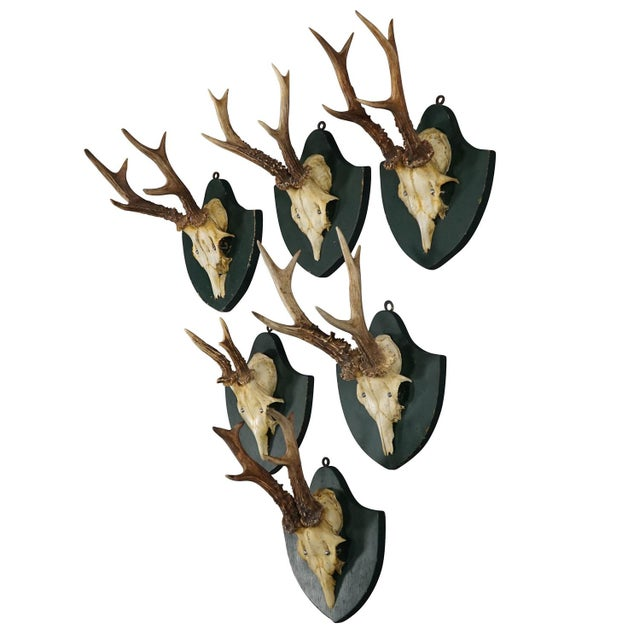 Black Six Large Antique Deer Trophies on Wooden Carved Plaques Ca. 1860 For Sale - Image 8 of 8