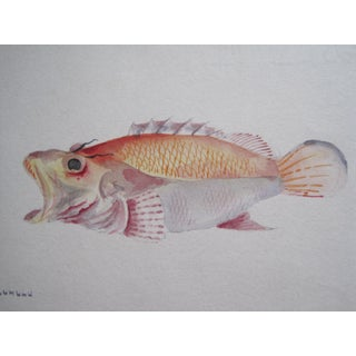 Original 19 C Watercolor Painting For Sale