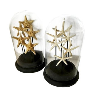 Mid-Century Modern French Glass Domes, With Natural Starfish - a Pair For Sale