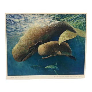 "Vintage ""Sperm Whale"" Color Animal Print by George L. Schelling Circa 1960 For Sale"