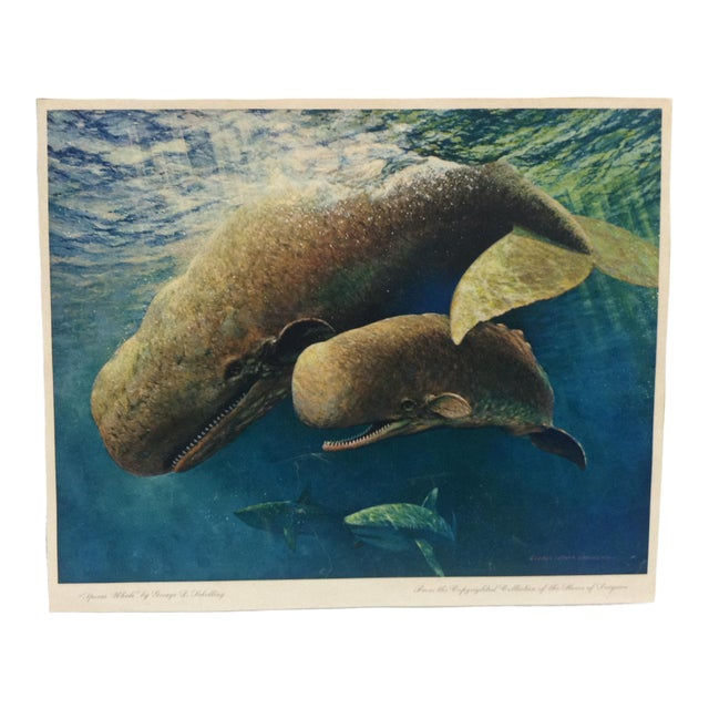 """Vintage """"Sperm Whale"""" Color Animal Print by George L. Schelling Circa 1960 For Sale"""