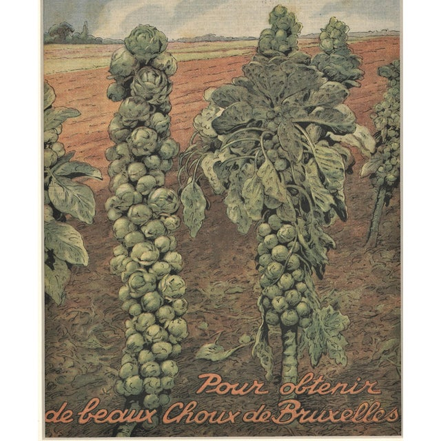 Matted French Mid-Century Country Kitchen Art-Vegetables-Brussels Sprouts For Sale - Image 4 of 5