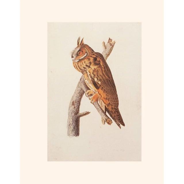 Stunning Long-Eared Owl by John J. Audubon, Vintage Cottage Print For Sale - Image 9 of 10