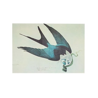 """1966 Cottage Lithograph, """"Swallow Tailed Hawk"""" by Audubon For Sale"""