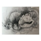 Image of Vintage Charcoal Drawing of Sea Shells For Sale