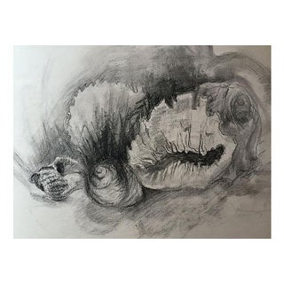 Vintage Charcoal Drawing of Sea Shells For Sale