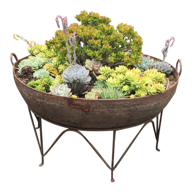 Iron Kadai Bowl With Succulents For Sale