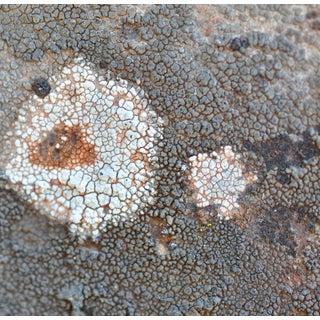 """Gaétan Caron """"Texture 4: Lichen"""" Mendocino, Ca Abstract Color Photograph, 2013 For Sale"""