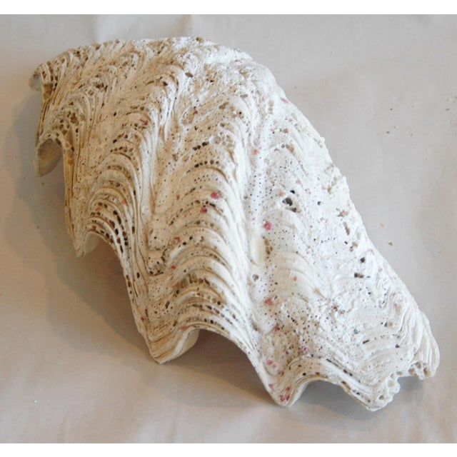 Antique Nautical Seashell Clamshell - Image 6 of 9