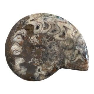 Natural Polished Fossil Specimen For Sale