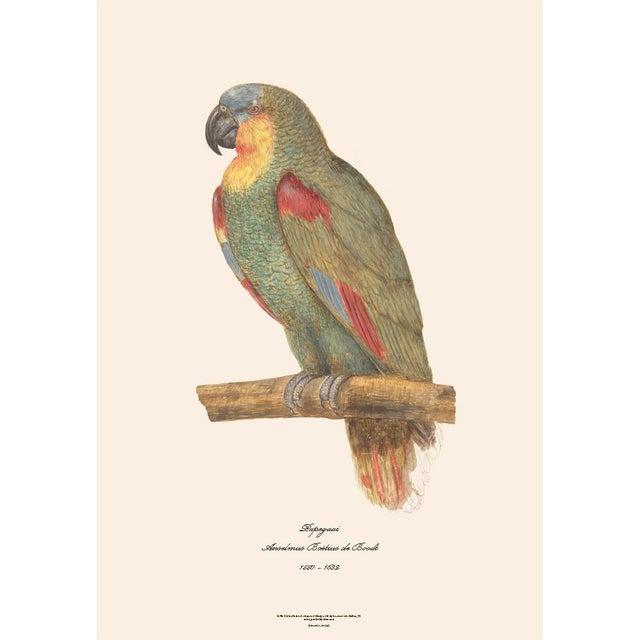 American Classical XL 1590s Contemporary Prints of Anselmus Boëtius De Boodt Parrots - Set of 4 For Sale - Image 3 of 7