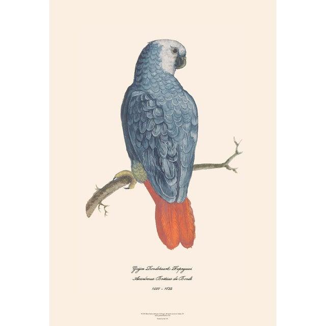 Set of 6 extra large gorgeous reproduction prints after watercolors of Parrots & Parakeets by Anselmus Boëtius de Boodt...