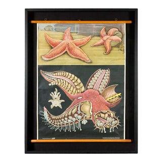 Framed Starfish Teaching Scroll For Sale