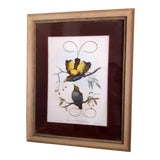 Image of 19th Century Mintern Bros Imp Hand Colored Lithograph by J. Gould and W. Hart For Sale