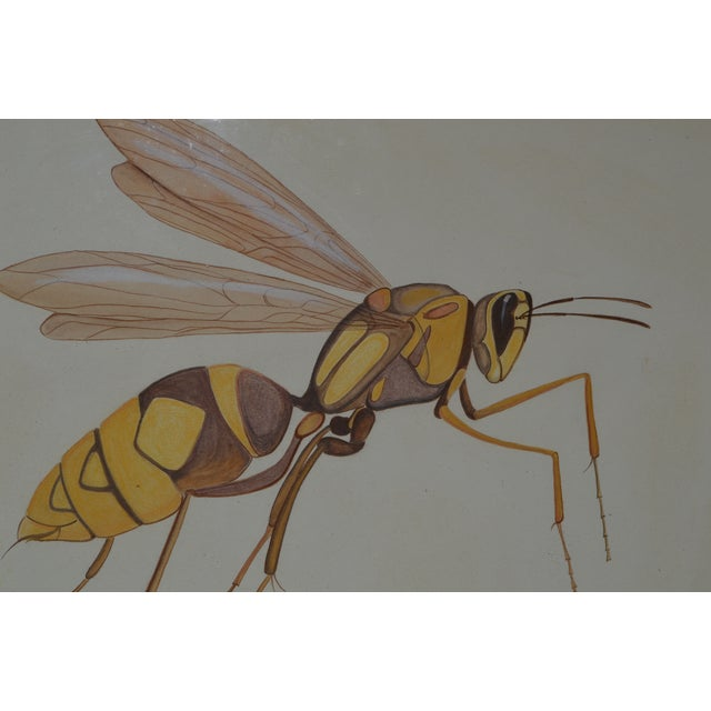 Insect Ant Pencil Paper Framed Art Still Life Painting Drawing Signed Payne For Sale - Image 10 of 12