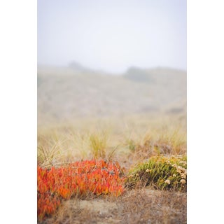 """Hardie Cobbs """"Flame Succulents"""" Contemporary Photograph For Sale"""