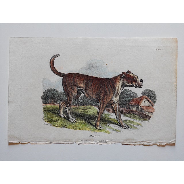 "This hand colored engraving depicts a mastiff. It was printed in the 19th Century in England on ""wove"" paper. Printed on..."