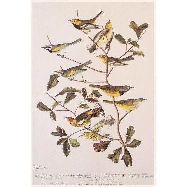 Light Gray American Warblers by John James Audubon, Vintage Cottage Style Print For Sale - Image 8 of 8