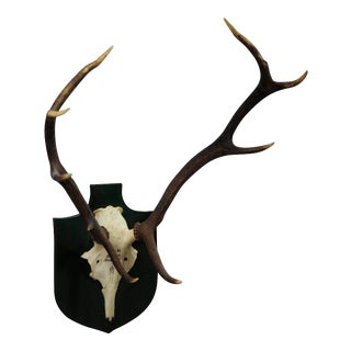 Black Forest Deer Trophy From Salem - Spain 1984 For Sale