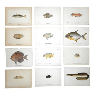 Antique 19th Century Lithographs-Tropical Fish - Set of 12 For Sale